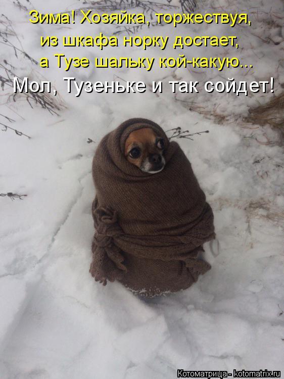 Котоматрица: Зима! Хозяйка, торжествуя,  из шкафа норку достает,  а Тузе шальку кой-какую... Мол, Тузеньке и так сойдет!