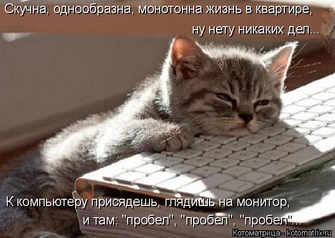 """Котоматрица: Скучна, однообразна, монотонна жизнь в квартире, К компьютеру присядешь, глядишь на монитор, ну нету никаких дел... и там: """"пробел"""", """"пробел"""", """"п"""