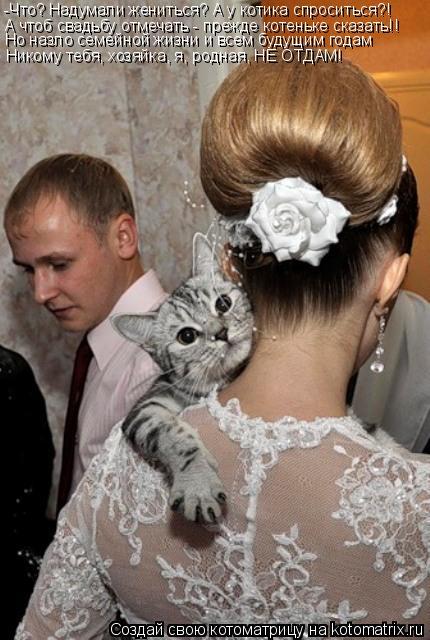 Котоматрица: -Что? Надумали жениться? А у котика спроситься?! А чтоб свадьбу отмечать - прежде котеньке сказать!! Но назло семейной жизни и всем будущим го