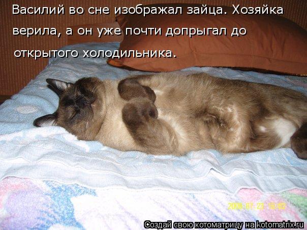 Котоматрица: Василий во сне изображал зайца. Хозяйка  верила, а он уже почти допрыгал до  открытого холодильника.