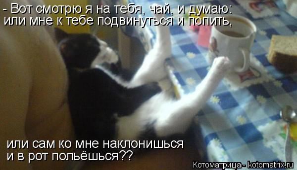 Котоматрица: - Вот смотрю я на тебя, чай, и думаю: или мне к тебе подвинуться и попить,  или сам ко мне наклонишься  и в рот польёшься??