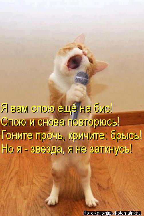 Котоматрица: Я вам спою ещё на бис! Спою и снова повторюсь! Гоните прочь, кричите: брысь! Но я - звезда, я не заткнусь!