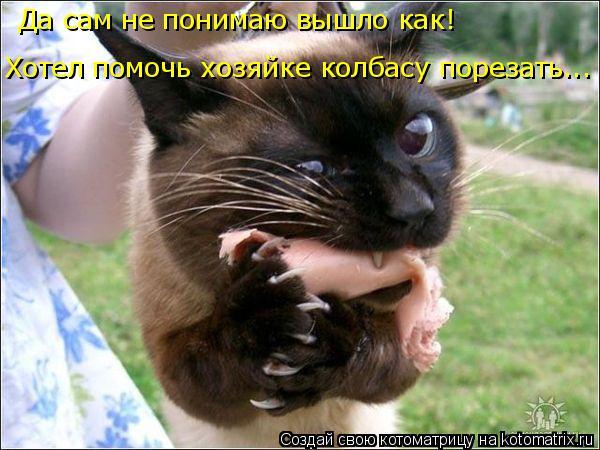 Котоматрица: Да сам не понимаю вышло как! Хотел помочь хозяйке колбасу порезать...