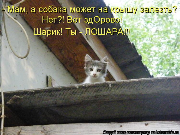 Котоматрица: - Мам, а собака может на крышу залезть? Нет?! Вот здОрово!  Шарик! Ты - ЛОШАРА!!!