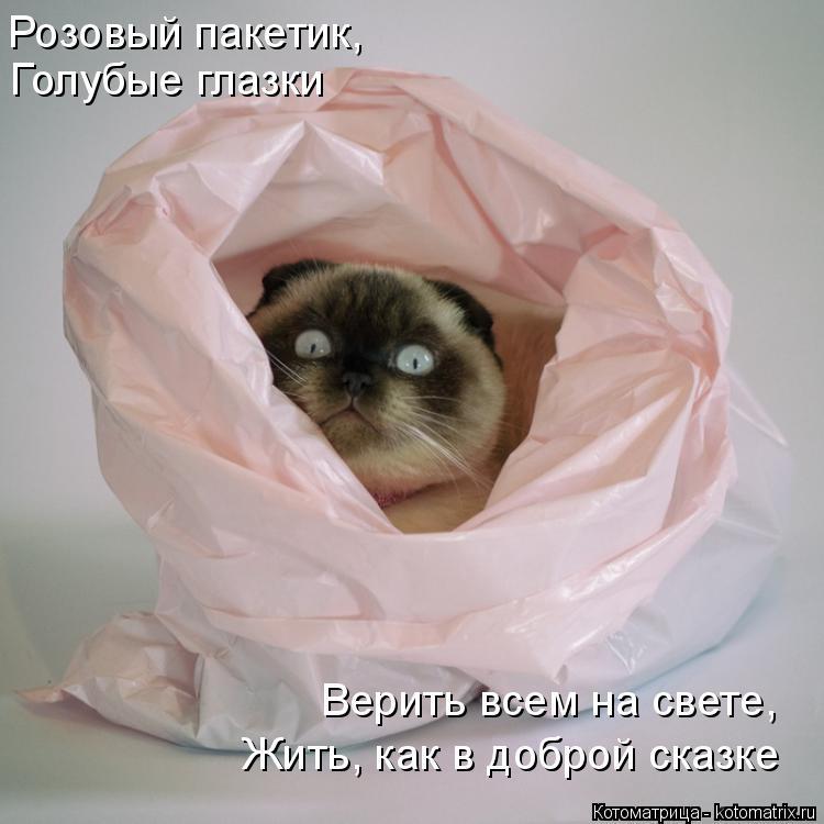 Котоматрица: Розовый пакетик, Голубые глазки Жить, как в доброй сказке Верить всем на свете,