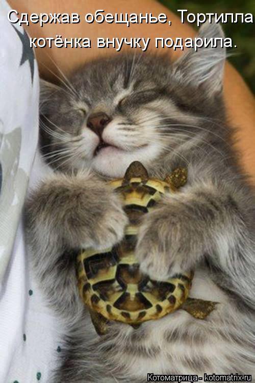 Котоматрица: Сдержав обещанье, Тортилла котёнка внучку подарила.