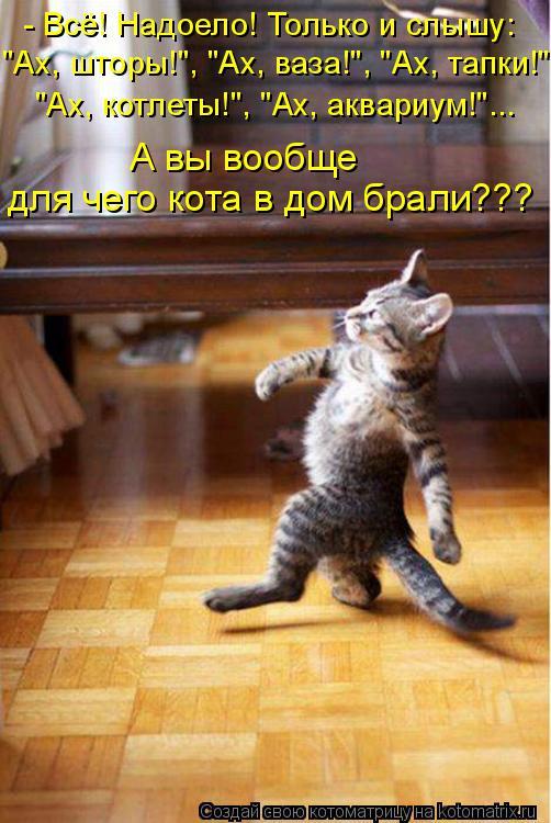 """Котоматрица: - Всё! Надоело! Только и слышу: """"Ах, шторы!"""", """"Ах, ваза!"""", """"Ах, тапки!"""" """"Ах, котлеты!"""", """"Ах, аквариум!""""... А вы вообще  для чего кота в дом брали???"""