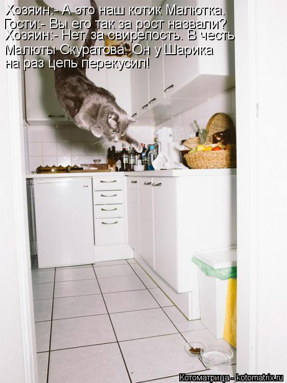 Котоматрица: Хозяин:- А это наш котик Малютка.  Гости:- Вы его так за рост назвали? Хозяин:- Нет, за свирепость. В честь Малюты Скуратова. Он у Шарика на раз ц