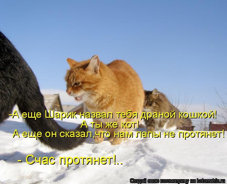Котоматрица: А ты же кот! А еще он сказал,что нам лапы не протянет!  - Счас протянет!.. -А еще Шарик назвал тебя драной кошкой!