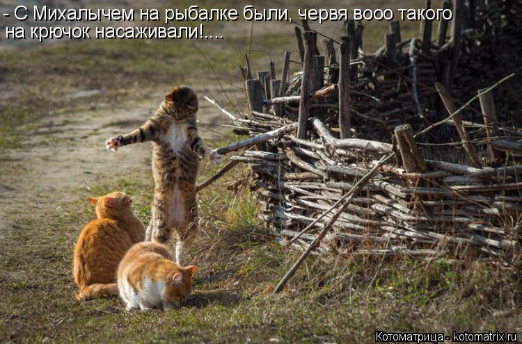 Котоматрица: - С Михалычем на рыбалке были, червя вооо такого на крючок насаживали!....