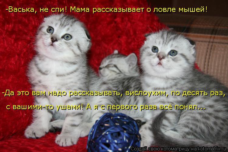 Котоматрица: -Васька, не спи! Мама рассказывает о ловле мышей! -Да это вам надо рассказывать, вислоухим, по десять раз,  с вашими-то ушами! А я с первого раза