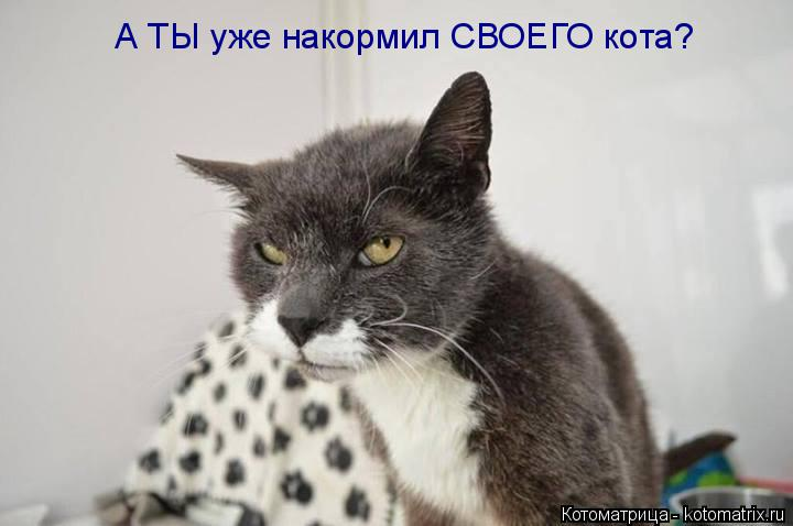 Котоматрица: А ТЫ уже накормил СВОЕГО кота?