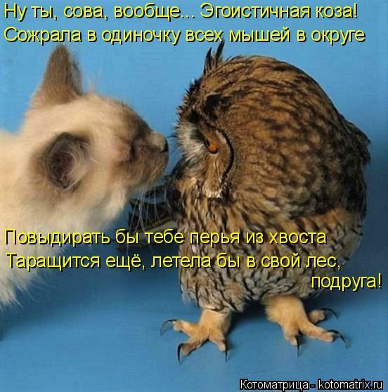 Котоматрица: Ну ты, сова, вообще... Эгоистичная коза! Сожрала в одиночку всех мышей в округе Повыдирать бы тебе перья из хвоста Таращится ещё, летела бы в с