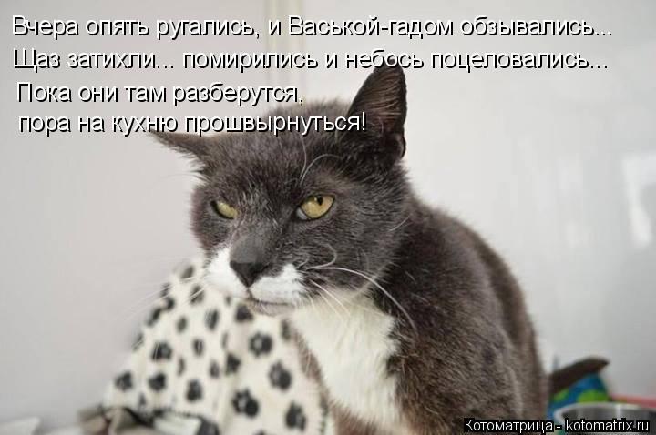 Котоматрица: Вчера опять ругались, и Васькой-гадом обзывались... Щаз затихли... помирились и небось поцеловались... Пока они там разберутся,  пора на кухню