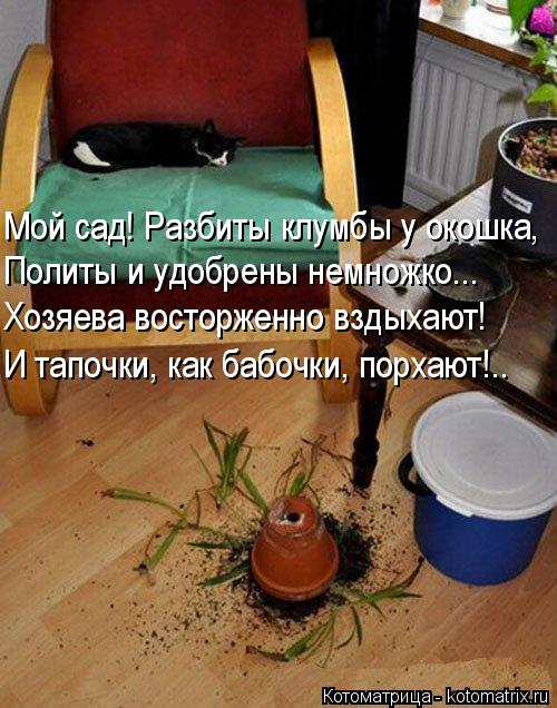 Котоматрица: Мой сад! Разбиты клумбы у окошка, Политы и удобрены немножко... Хозяева восторженно вздыхают! И тапочки, как бабочки, порхают!..