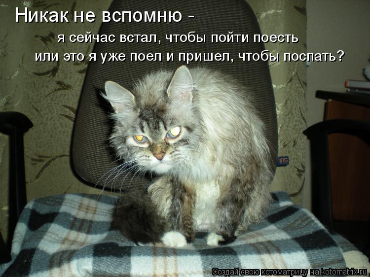 Котоматрица: Никак не вспомню -   я сейчас встал, чтобы пойти поесть или это я уже поел и пришел, чтобы поспать?
