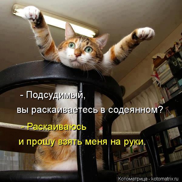 Котоматрица: - Подсудимый, вы раскаиваетесь в содеянном? - Раскаиваюсь и прошу взять меня на руки.