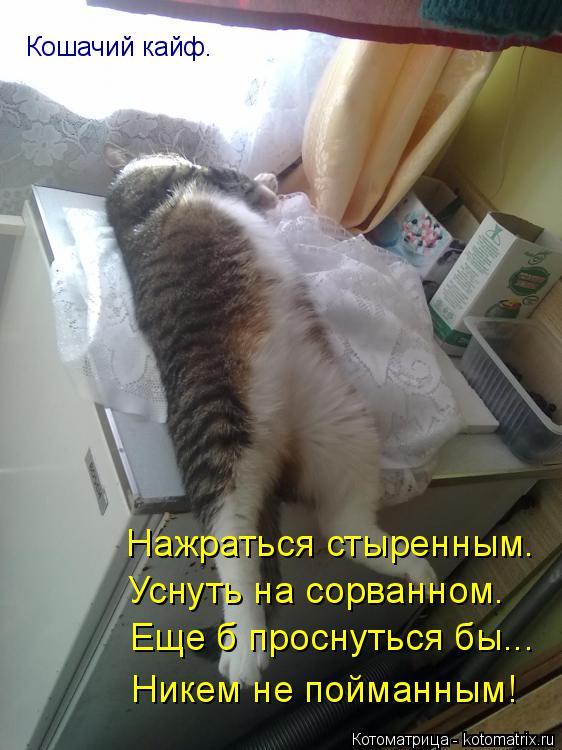 Котоматрица: Кошачий кайф. Нажраться стыренным. Уснуть на сорванном. Еще б проснуться бы... Никем не пойманным!
