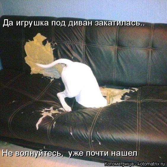 Котоматрица: Да игрушка под диван закатилась.. Не волнуйтесь,  уже почти нашел