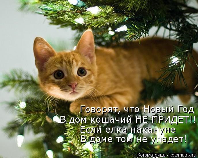 Котоматрица: Говорят, что Новый Год В дом кошачий НЕ ПРИДЕТ!!! Если елка накануне В доме том не упадет!
