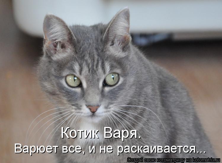 Котоматрица: Котик Варя. Варюет все, и не раскаивается...