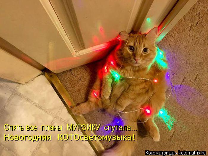 Котоматрица: Опять все  планы  МУРЗИКУ  спутала... Новогодняя  КОТОсветомузыка!