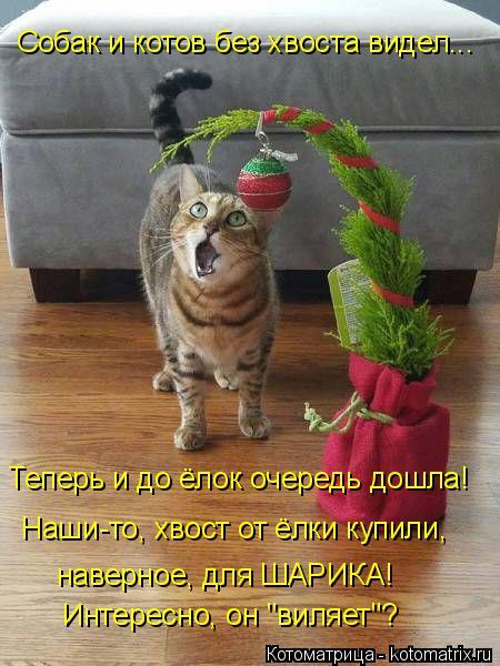 """Котоматрица: Теперь и до ёлок очередь дошла! Наши-то, хвост от ёлки купили, наверное, для ШАРИКА! Интересно, он """"виляет""""? Собак и котов без хвоста видел..."""