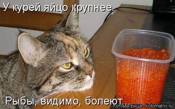 Котоматрица: У курей яйцо крупнее. Рыбы, видимо, болеют...