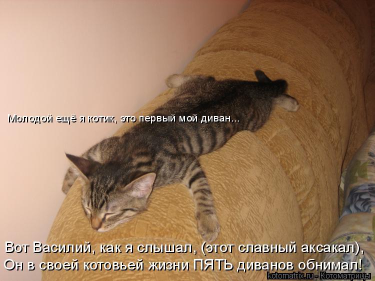 Котоматрица: Вот Василий, как я слышал, (этот славный аксакал), Он в своей котовьей жизни ПЯТЬ диванов обнимал! Молодой ещё я котик, это первый мой диван...