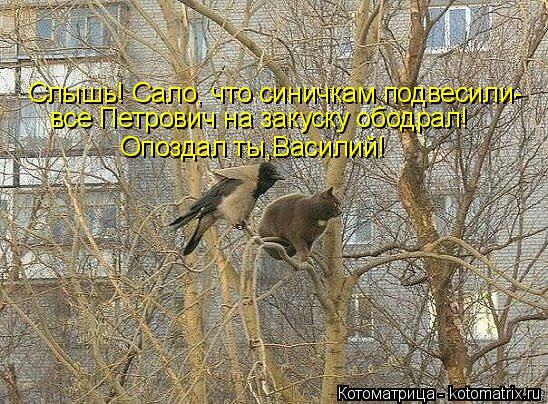 Котоматрица: Слышь! Сало, что синичкам подвесили- все Петрович на закуску ободрал! Опоздал ты,Василий!