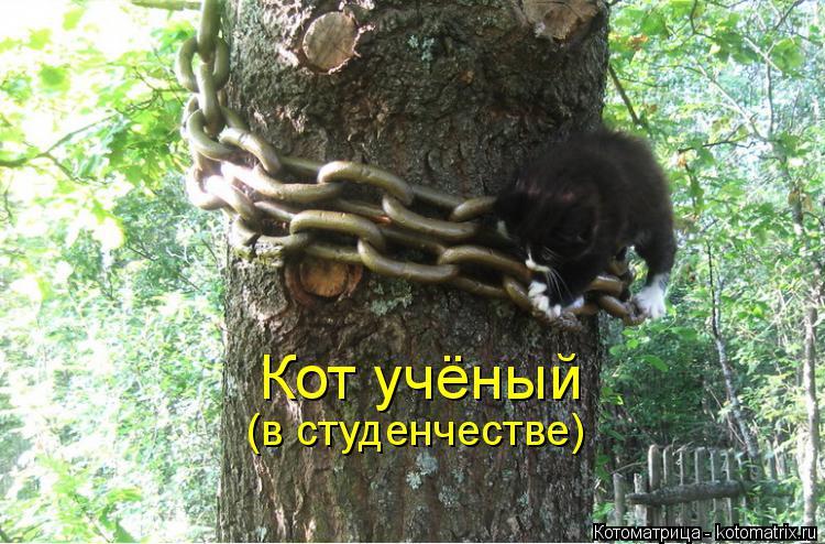 Котоматрица: Кот учёный (в студенчестве)