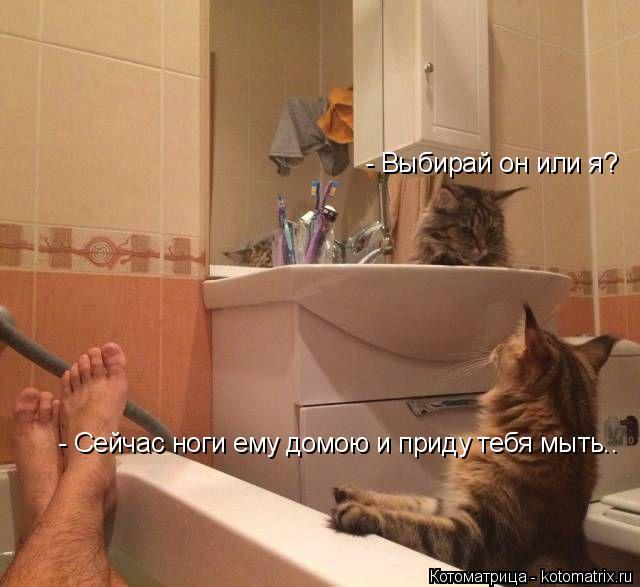 Котоматрица: - Сейчас ноги ему домою и приду тебя мыть.. - Выбирай он или я?