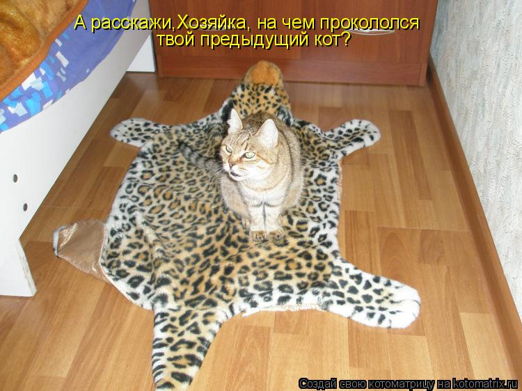 Котоматрица: А расскажи,Хозяйка, на чем прокололся твой предыдущий кот?