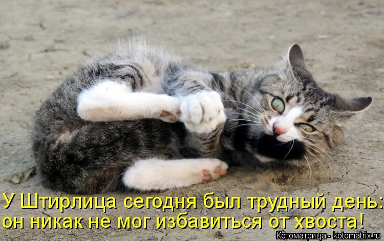 Котоматрица: У Штирлица сегодня был трудный день: он никак не мог избавиться от хвоста!
