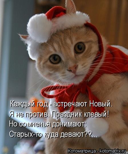 Котоматрица: Каждый год - встречают Новый. Я не против. Праздник клевый! Но сомненья донимают: Старых-то куда девают??...