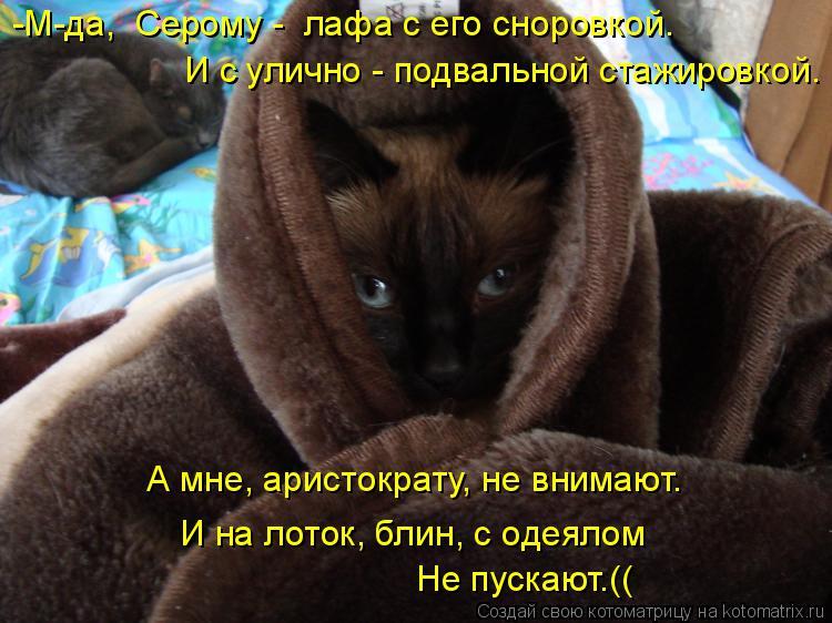 Котоматрица: И с улично - подвальной стажировкой. А мне, аристократу, не внимают. И на лоток, блин, с одеялом Не пускают.(( -М-да,  Серому -  лафа с его сноровко