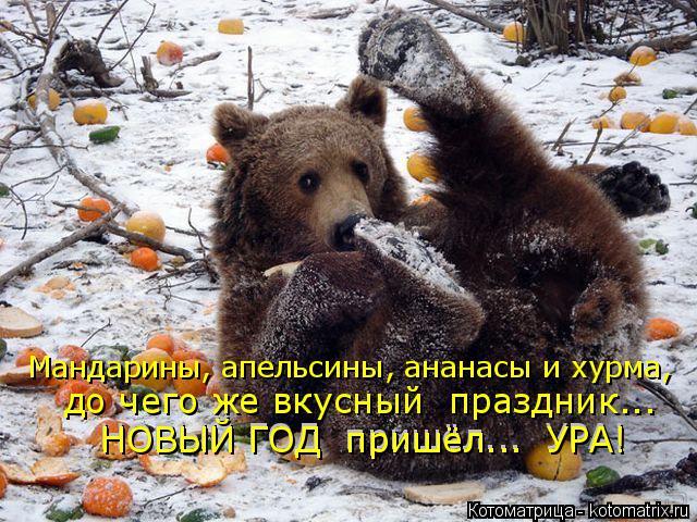 Котоматрица: Мандарины, апельсины, ананасы и хурма, до чего же вкусный  праздник... НОВЫЙ ГОД  пришёл...  УРА! НОВЫЙ ГОД  пришёл...  УРА!