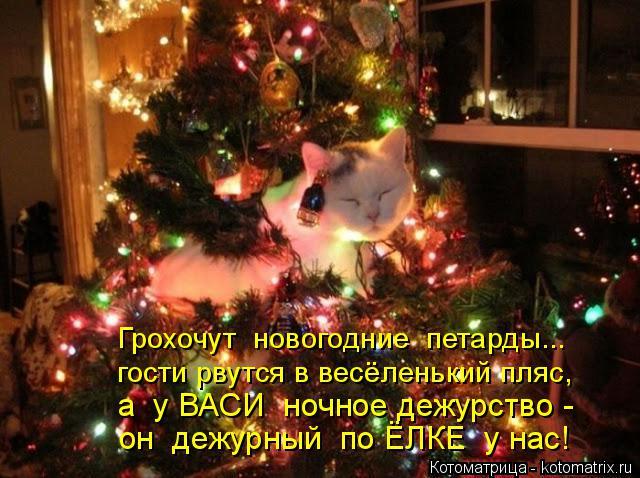 Котоматрица: Грохочут  новогодние  петарды... гости рвутся в весёленький пляс, а  у ВАСИ  ночное дежурство - он  дежурный  по ЁЛКЕ  у нас!
