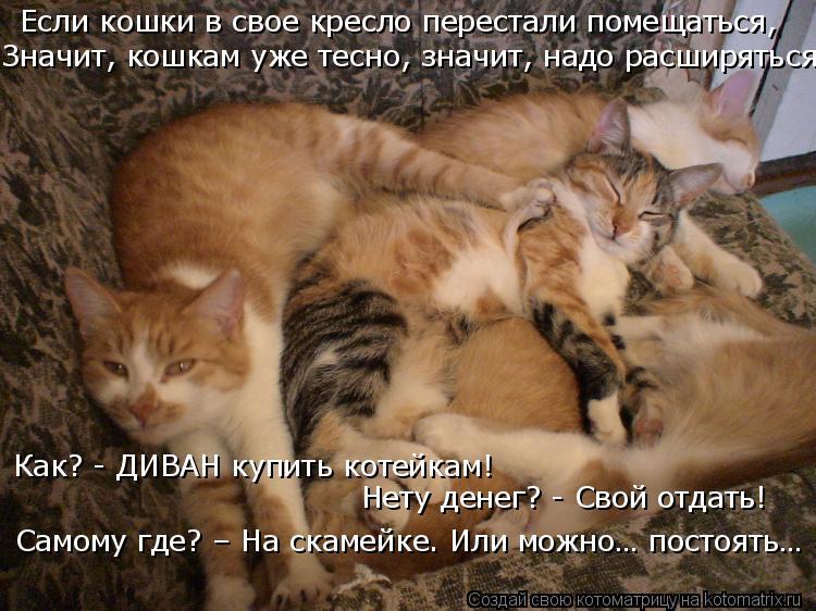 Котоматрица: Если кошки в свое кресло перестали помещаться, Значит, кошкам уже тесно, значит, надо расширяться. Как? - ДИВАН купить котейкам!  Нету денег? -