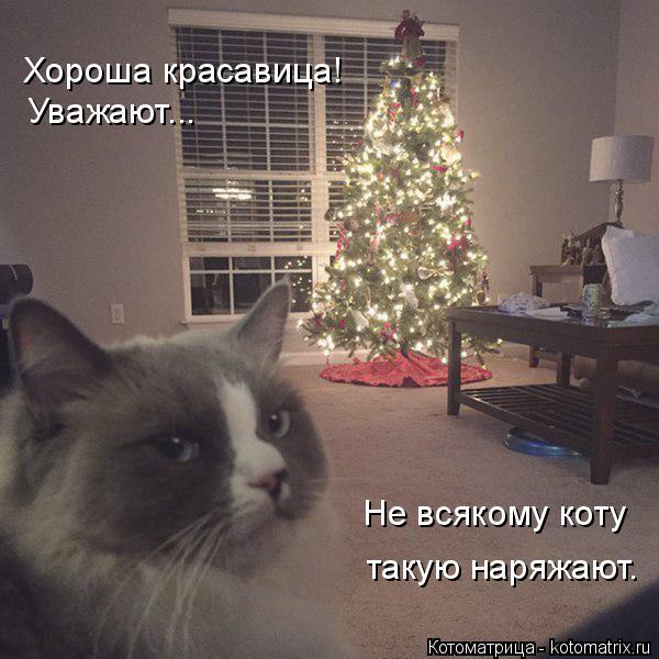 Котоматрица: Хороша красавица! Уважают... Не всякому коту такую наряжают.