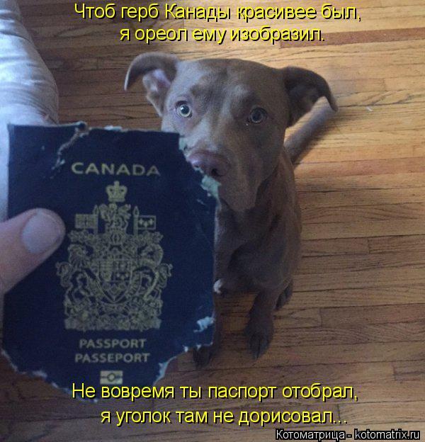 Котоматрица: я уголок там не дорисовал... Не вовремя ты паспорт отобрал, я ореол ему изобразил. Чтоб герб Канады красивее был,