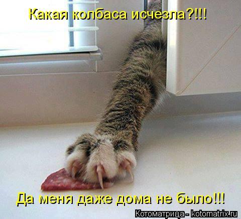 Котоматрица: Какая колбаса исчезла?!!! Да меня даже дома не было!!!