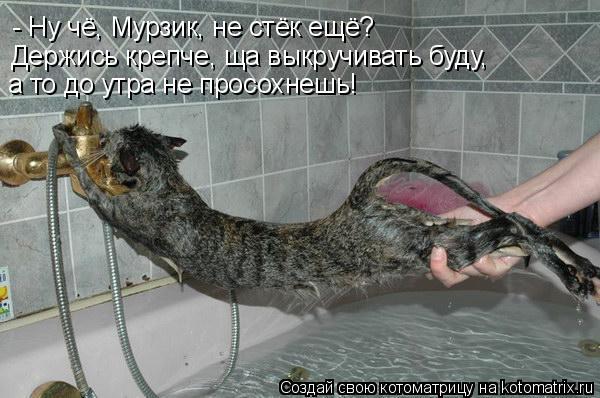 Котоматрица: - Ну чё, Мурзик, не стёк ещё? Держись крепче, ща выкручивать буду, а то до утра не просохнешь!