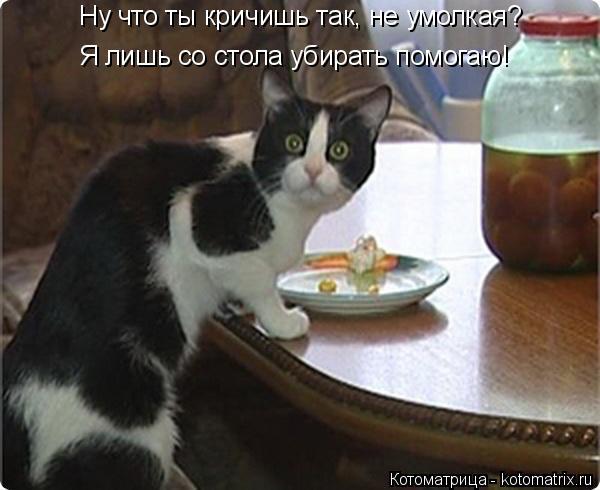 Котоматрица: Ну что ты кричишь так, не умолкая? Я лишь со стола убирать помогаю!
