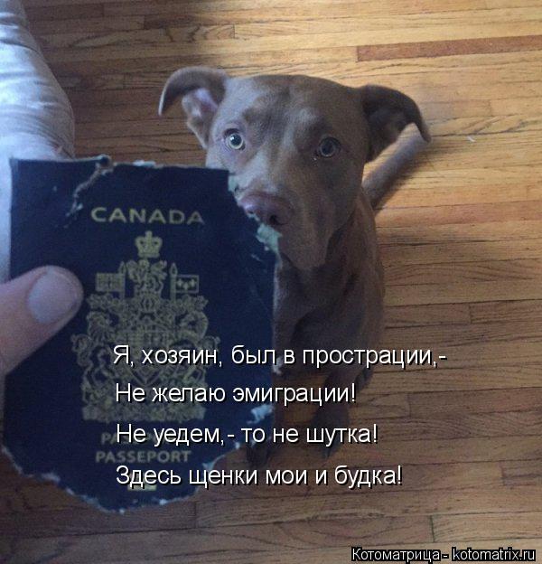 Котоматрица: Я, хозяин, был в прострации,-   Не желаю эмиграции! Не уедем,- то не шутка! Здесь щенки мои и будка!
