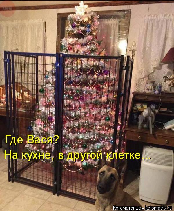 Котоматрица: Где Вася? На кухне, в другой клетке...
