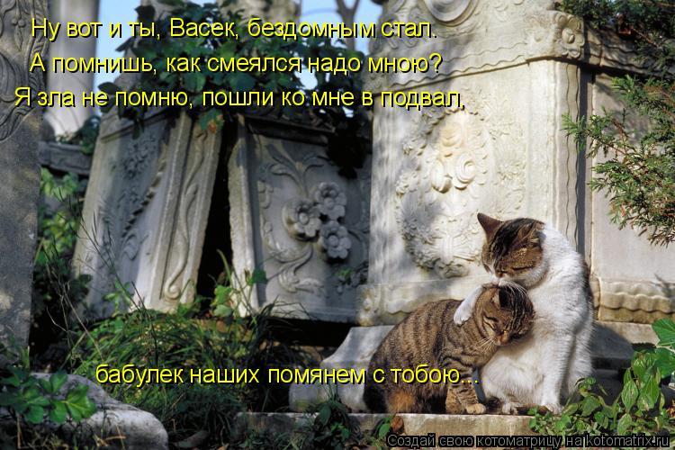 Котоматрица: А помнишь, как смеялся надо мною? Ну вот и ты, Васек, бездомным стал. бабулек наших помянем с тобою... Я зла не помню, пошли ко мне в подвал,