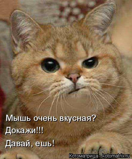 Котоматрица: Мышь очень вкусная? Докажи!!! Давай, ешь!