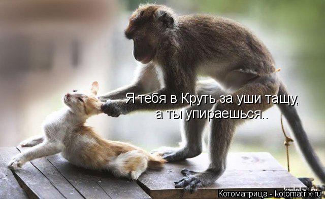 Котоматрица: Я тебя в Круть за уши тащу, а ты упираешься..
