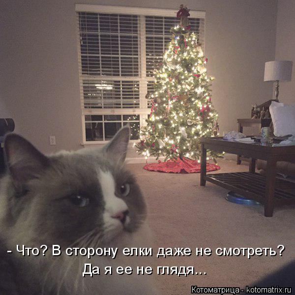 Котоматрица: - Что? В сторону елки даже не смотреть? Да я ее не глядя...